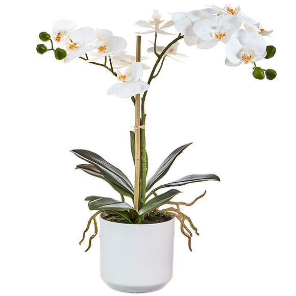 "18.25"" Real Touch Potted Orchid"