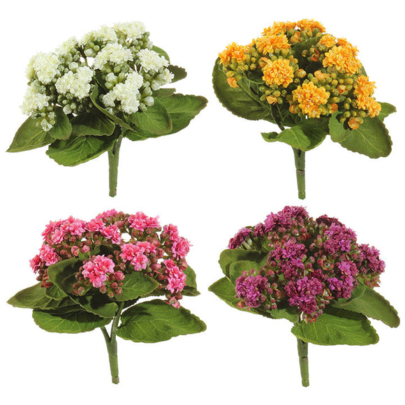 "9"" Kalanchoe Bush – 4 Assorted"