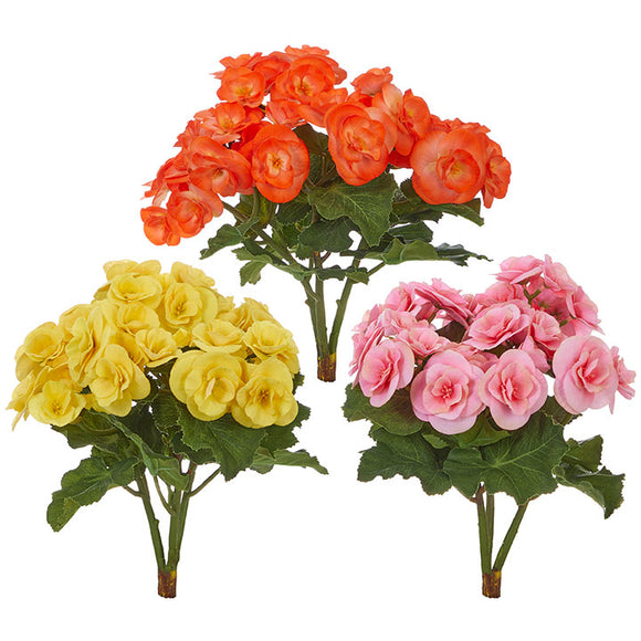 "11"" Begonia Bush – 3 Assorted"