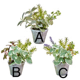 "9.75"" Potted Herb – 3 Assorted"