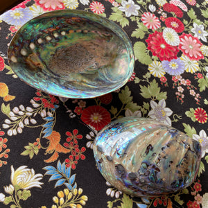 Abalone Shell, lacquered and polished