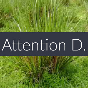 Attention D. Essential Oil Blend