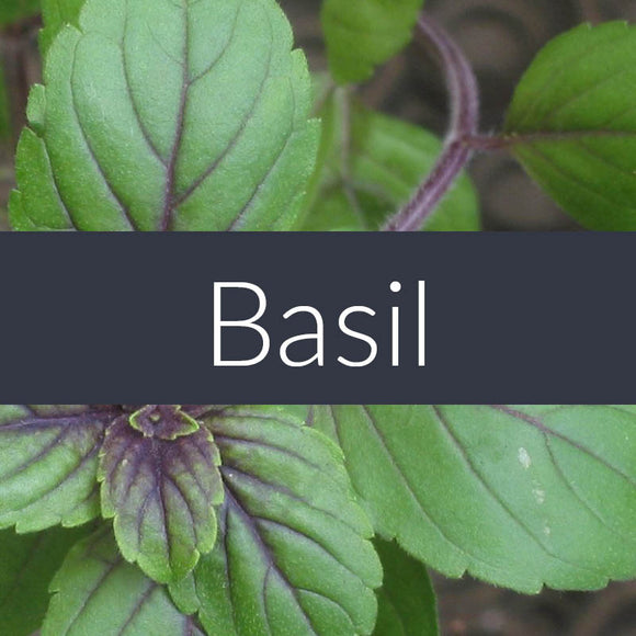 Basil-Linalol Essential Oil