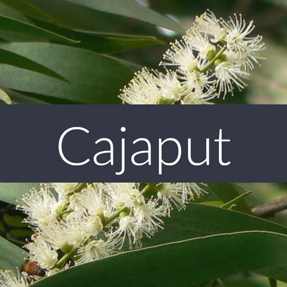 Cajaput Essential Oil