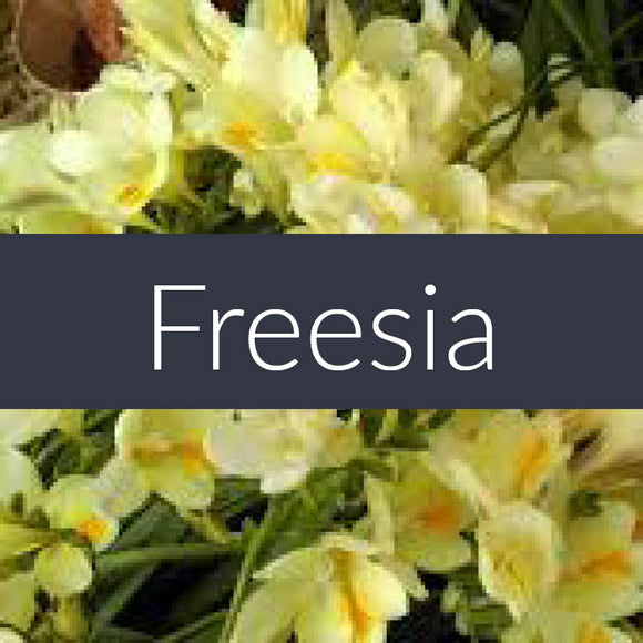 Freesia Finesse Crystals