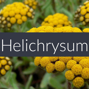 Helichrysum Absolute Essential Oil