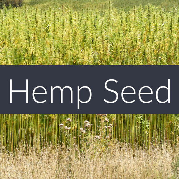 Hemp Seed Oil CURRENTLY SOLD OUT