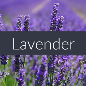 Lavender Fragrance Oil