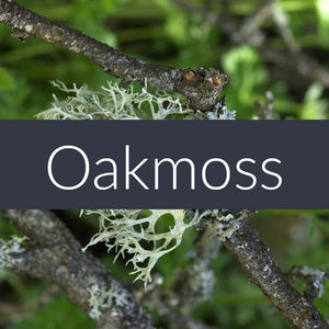 Oakmoss Absolute Essential Oil