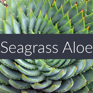 Seagrass Aloe Auto Freshener Spray