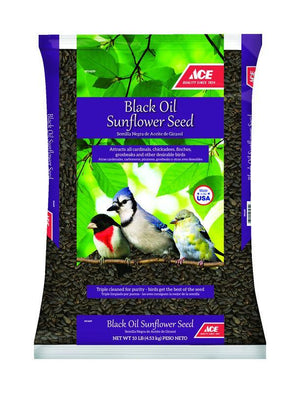 Black Oil Sunflower Bird Seed 40lbs - Young's Pet Supplies