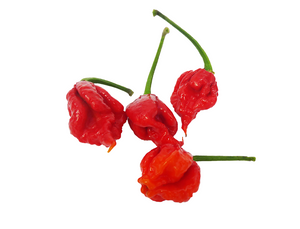 A SPECIAL - 4 Carolina Reaper Pepper (WORLDS HOTTEST PEPPER)