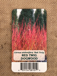 Shrub - Cornus stolonifera 'Red Twig Dogwood' (1 Gallon)