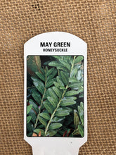 Load image into Gallery viewer, Shrub - Lonicera pileata 'May Green' (4 Inch)
