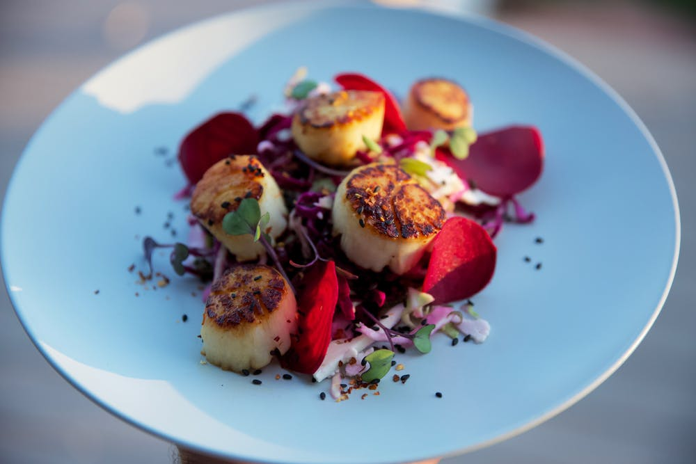 A plate of seared scallops served atop shredded red cabbage, micro greens, and garnished with shaved red beets