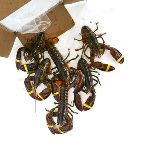 Live Maine Lobster - 1.25 - 1.5 lb