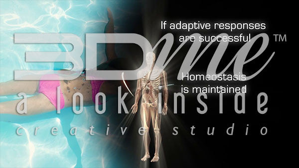 How does the body's adaptive responses affect homeostasis and disease?