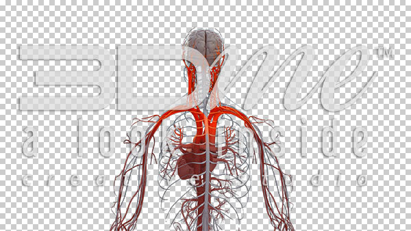 Central Nervous System Rotate 1