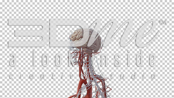 Central Nervous System Rotate 2