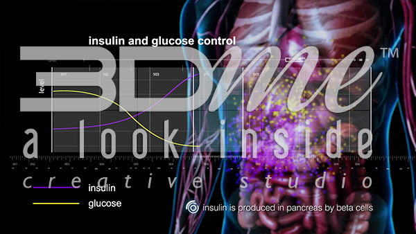 Graph: Insulin and Glucose Control