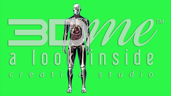 Human Male Whole Body (greenscreen)