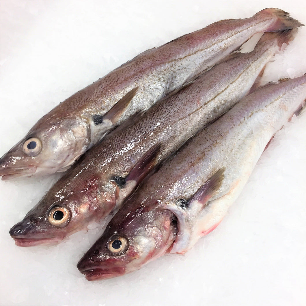 Whiting : Whole