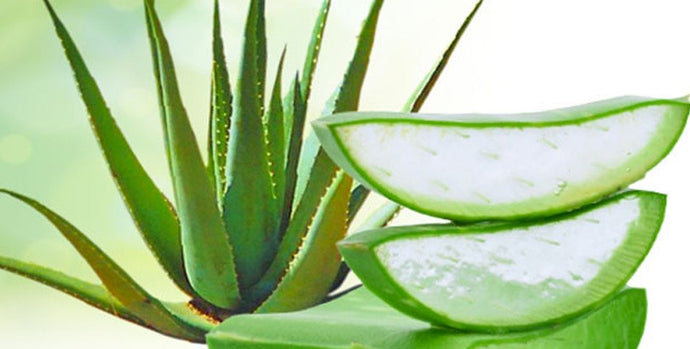 Anti-fatigue : l'aloe vera ce super-aliment qui nous boost