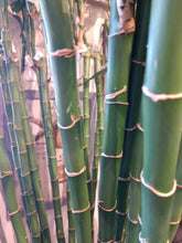 Load image into Gallery viewer, Bamboo Cane 60""