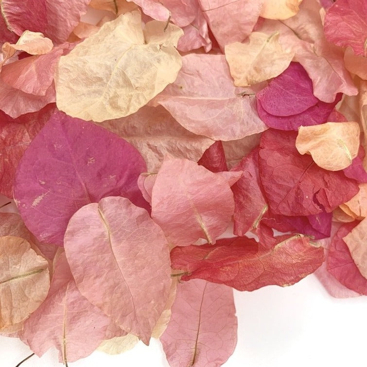 Bougainville - Dollz Confetti
