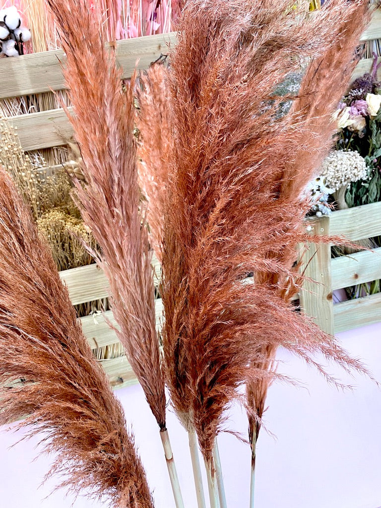 Brown Luxe Giant Pampas