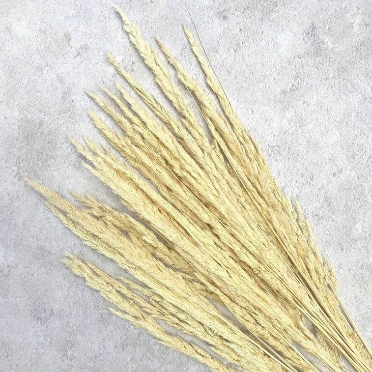 Oat Feather Pampas