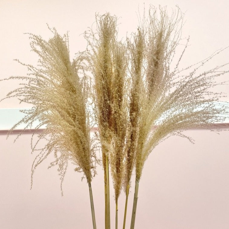 Natural Fluffy Reed Grass