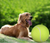Giant Tennis Ball — The Greatest Dog Toy Ever (Possibly)