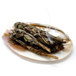 Abalone shell smudge dish