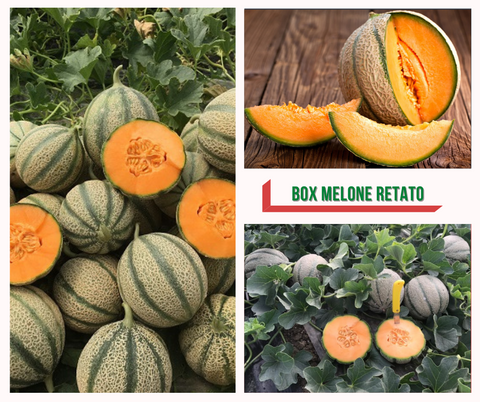 Melone Cantalupo Siciliano - Box in cartone da 10/12 Kg