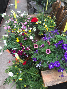 "Hanging Basket (Kord) - 14"" Premium Mix Sun Loving"