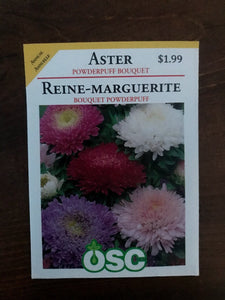 Aster - Powderpuff Bouquet