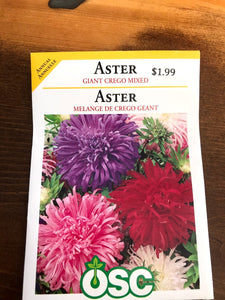 Aster - Giant Crego Mix