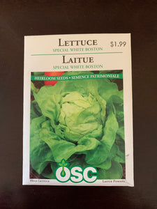 Lettuce - Special White Boston