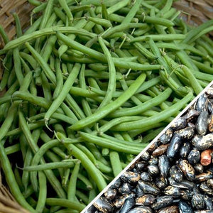 Beans (Seed)