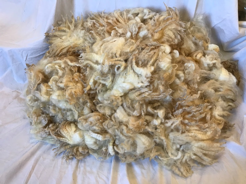 Raw Natural White Fleece