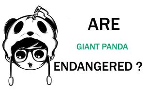 are-giant-panda-endangered-in-2020