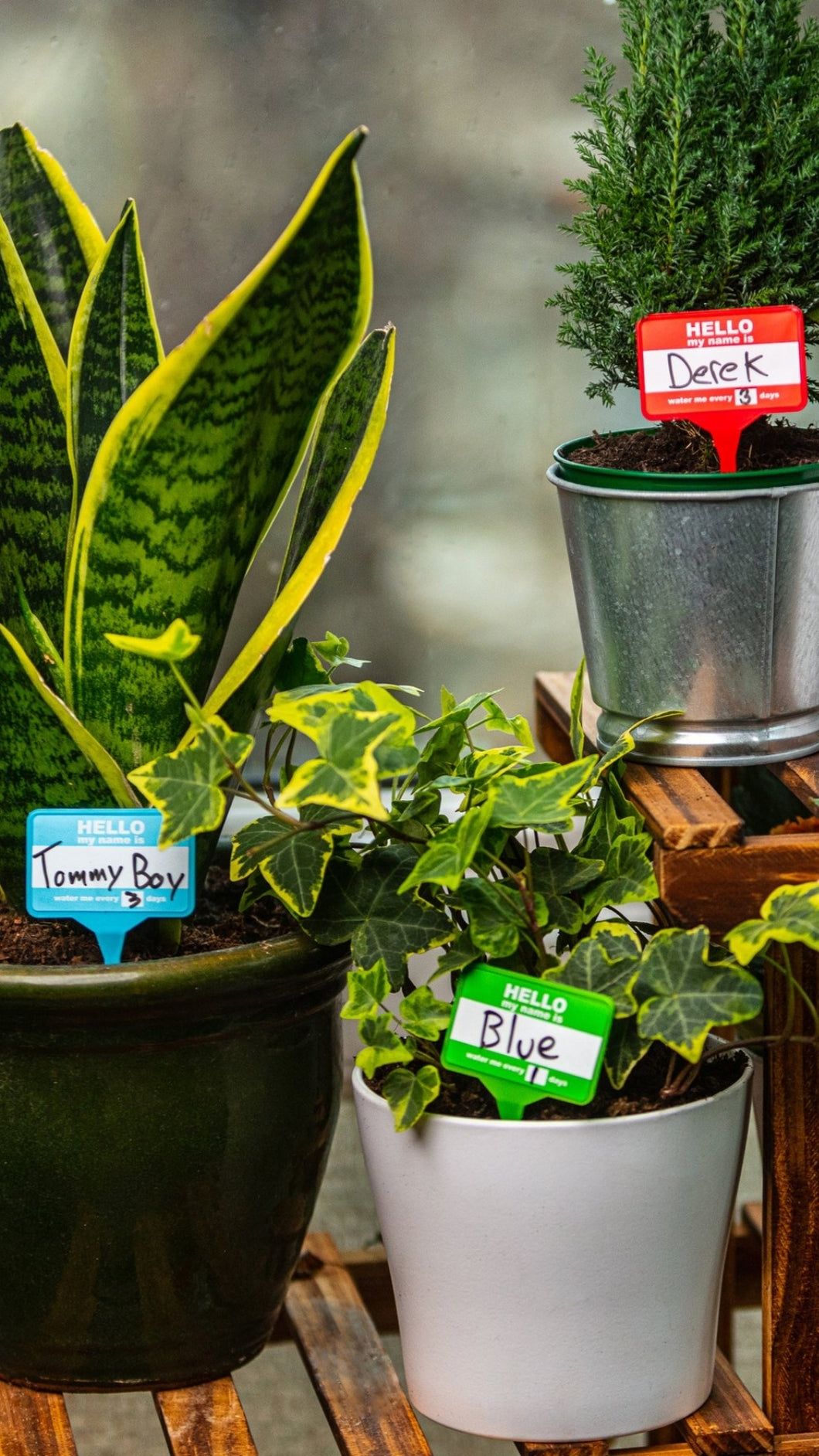 Plant Name Badges