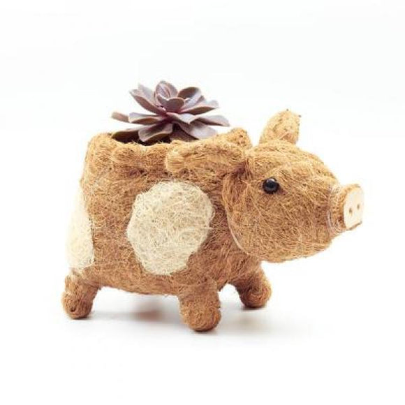 Coco Coir Country Pig Planter