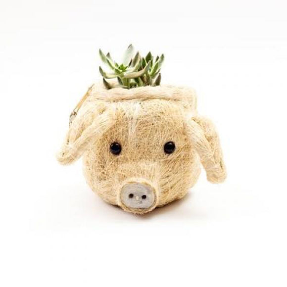 Mini Coco Coir Pig Planter