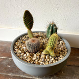 Cactus Garden w/ Large Pedestal Bowl, Choice of Style