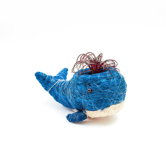 Coco Coir Baby Blue Whale Planter