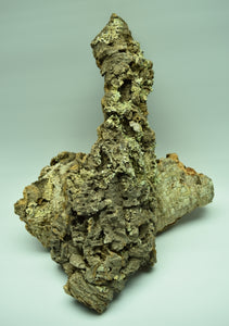 Natural Cork Bark Flat with lichen. For terrariums and mouting plants.