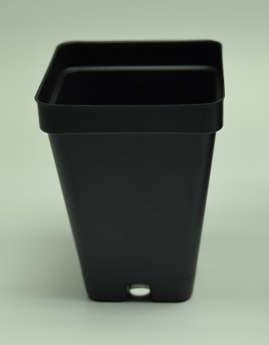 "Close up of 2.5"" Square Black Plasic Pot."