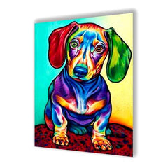 Colored Dachshund